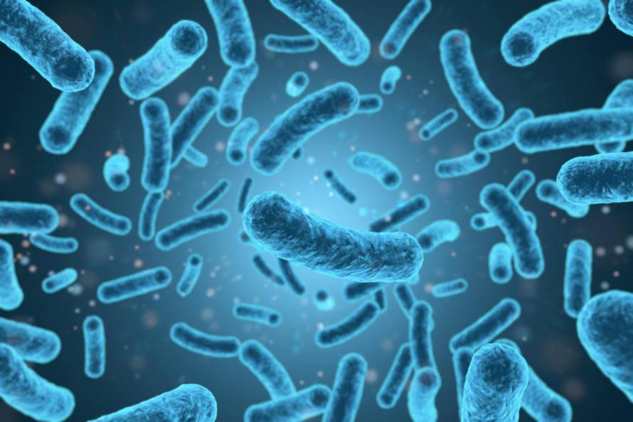 As bactérias são organismos procariontes causadoras de diversas doenças, como leptospirose e coqueluche.
