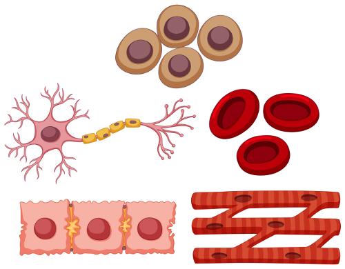 As células são as unidades funcionais e estruturais dos seres vivos