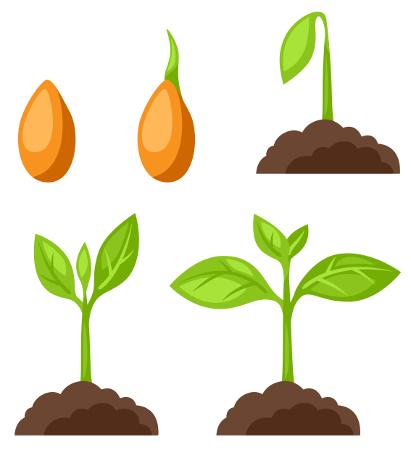 As citocininas, entre as suas diversas funções, atuam na germinação das sementes
