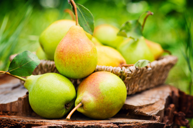 As esclereides estão presentes na parte carnosa da pera, o que confere uma textura arenosa à fruta