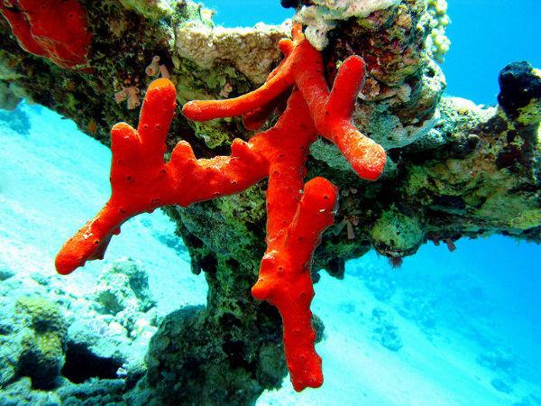 As esponjas são animais que apresentam corpo repleto de poros