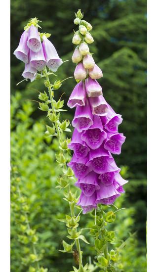 As flores são órgãos reprodutivos das angiospermas e possuem diversas formas de classificação