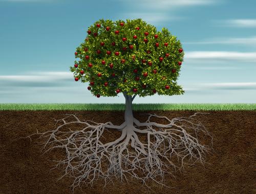 As raízes permitem a fixação no substrato, bem como a absorção, condução e reserva de nutrientes