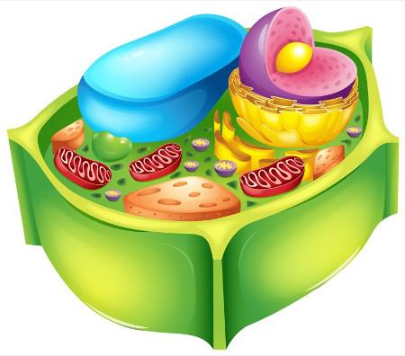 Aspectos gerais de uma célula vegetal