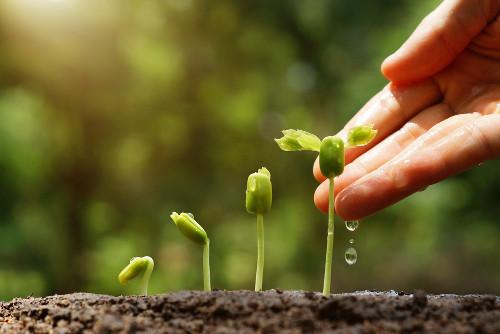 Desenvolvimento vegetal