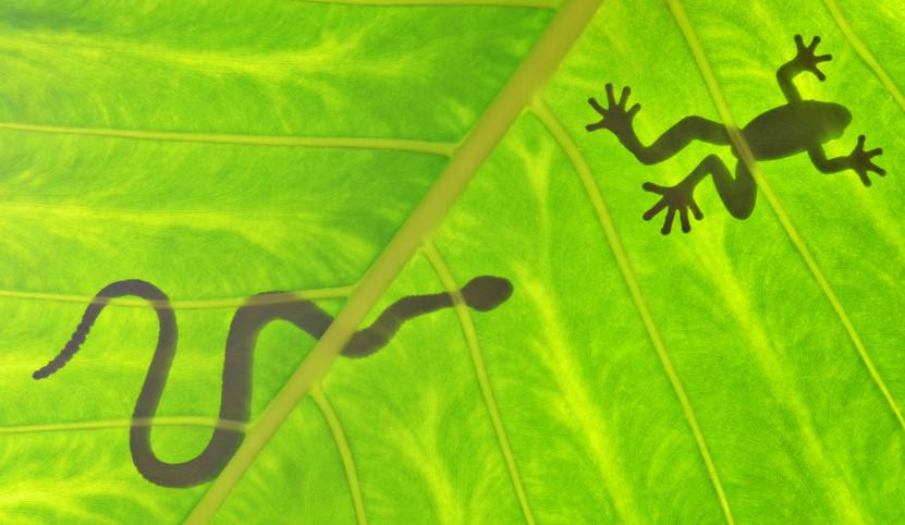 Em uma cadeia alimentar, um organismo sempre serve de alimento para outro