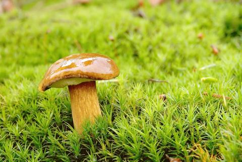 Entre os fungos mais conhecidos estão os bolores e os cogumelos