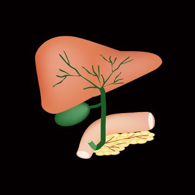 Ilustração da estrutura anatômica do fígado, vesícula biliar, vias biliares e pâncreas