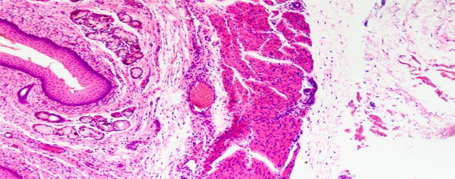 Imagem microscópica do tecido epitelial