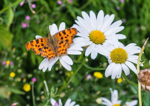 Interação entre inseto e planta