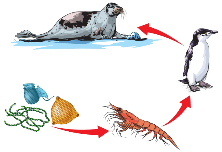 Na cadeia alimentar, o fluxo de energia é unidirecional