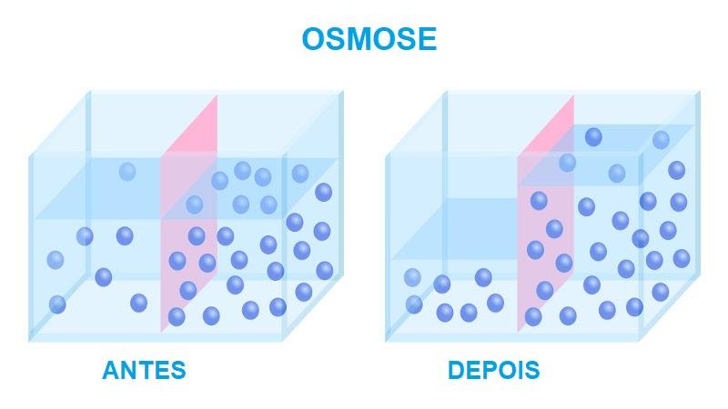 Na osmose, a água passa do meio com menor concentração de soluto para o meio de maior concentração