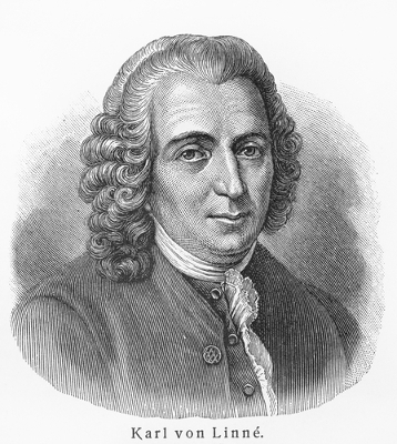 Naturalista sueco Karl von Linné, conhecido também como Lineu
