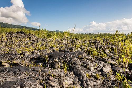 Nessa figura, é possível observar um local cheio de lava sendo colonizado por plantas