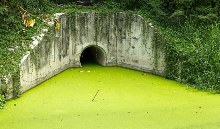 O aumento de nutrientes ocasiona a proliferação de algas, que formam uma camada sobre a superfície da água