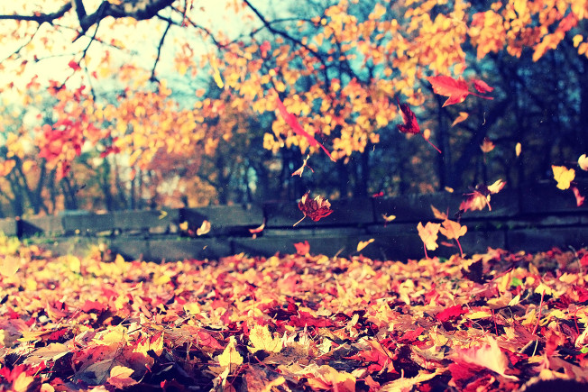 O aumento da produção do etileno no outono leva à queda das folhas das árvores