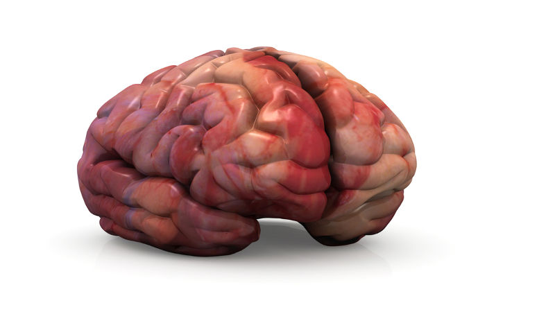 O cérebro dos mamíferos é maior entre os vertebrados e apresenta um córtex bem desenvolvido