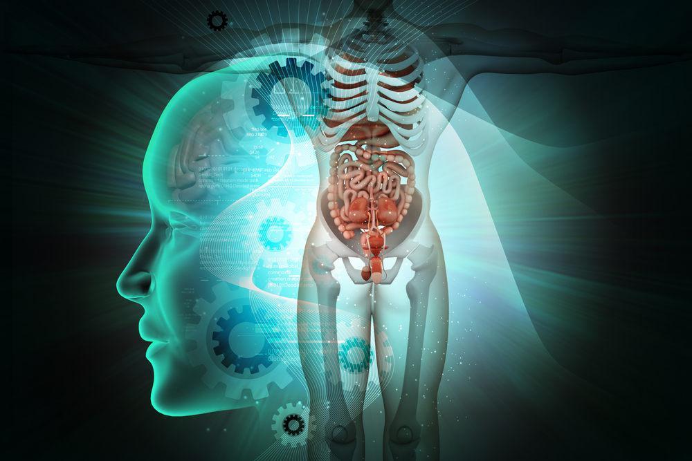 O corpo humano é uma máquina perfeita que funciona graças ao trabalho realizado por uma série de órgãos.