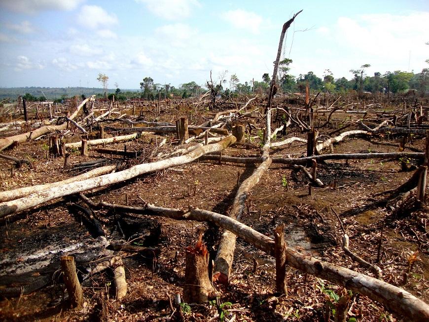 O desmatamento, um dos problemas ambientais mais comum no nosso país, diz respeito à retirada da vegetação de um local.