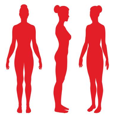 O estrogênio atua na formação das características sexuais secundárias, como o desenvolvimento dos seios
