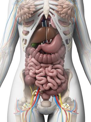 O estudo da anatomia e fisiologia permite conhecermos o funcionamento do nosso corpo