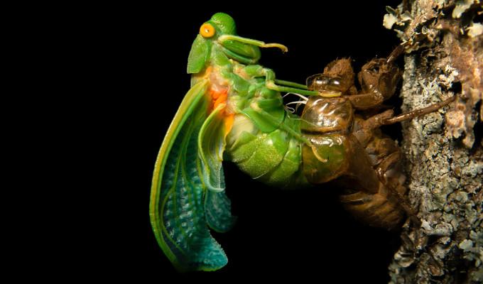 O processo de muda ou ecdise permite que animais que possuem exoesqueleto possam desenvolver-se
