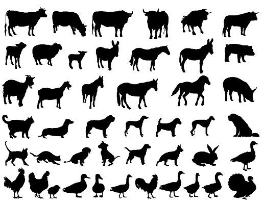 O reino dos animais é o mais representativo dentre os seres vivos