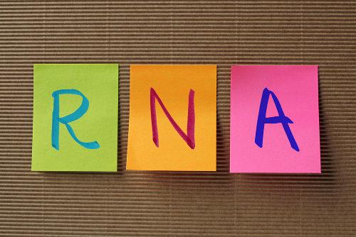 O RNA é um ácido nucleico formado por vários nucleotídeos