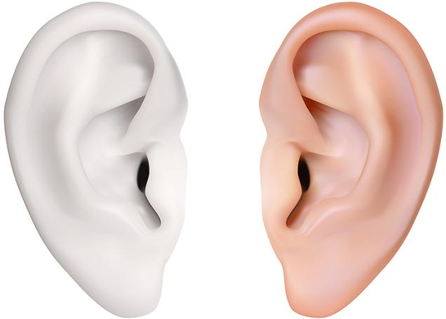 O tecido cartilaginoso corresponde a um tecido conjuntivo, ele pode ser encontrado no pavilhão auditivo