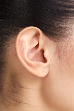 O tecido cartilaginoso pode ser encontrado em diversas partes do nosso corpo, incluindo-se o pavilhão auditivo