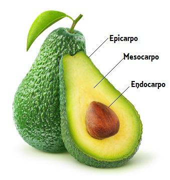 Observe as partes que compõem um fruto
