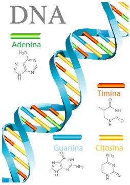 Observe a representação de um trecho de uma molécula de DNA