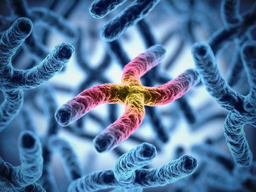 Os cromossomos possuem os genes responsáveis por nossas características