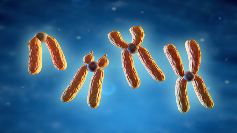 Os cromossomos são classificados de acordo com a posição dos seus centrômeros