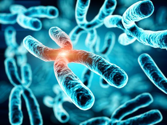 Os cromossomos são constituídos por longas moléculas de DNA associadas a proteínas