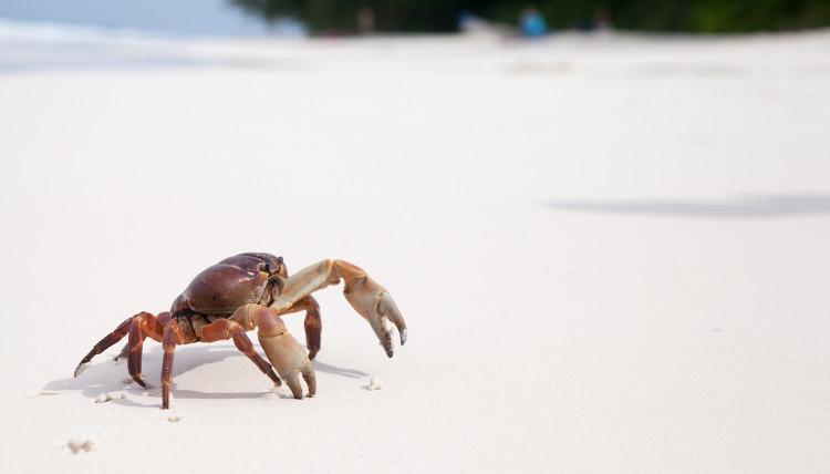 Os crustáceos, como o caranguejo, apresentam um acréscimo de mineral à matriz orgânica de seu exoesqueleto