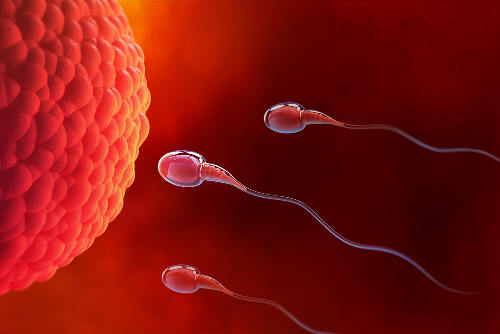 Os espermatozoides são os gametas masculinos dos animais