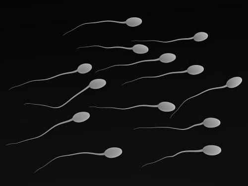 Os espermatozoides são produzidos nos testículos