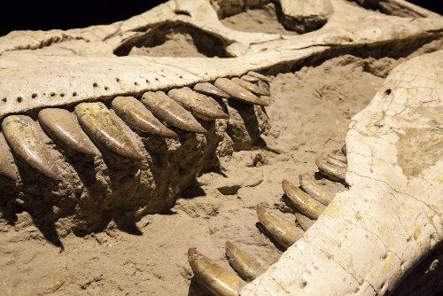 Os fósseis de partes duras são encontrados com maior frequência