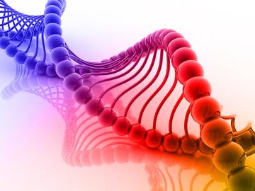 Os genes são sequências de nucleotídeos do DNA capazes de sintetizar uma proteína