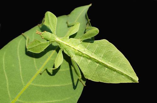 Os insetos caracterizam-se pela presença de três pares de pernas e um par de antenas