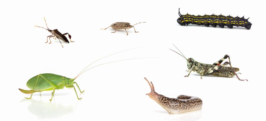 Os invertebrados são um grupo muito diversificado, que corresponde a cerca de 95% das espécies animais conhecidas