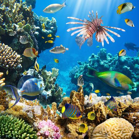 Os recifes de corais são os ecossistemas com maior biodiversidade