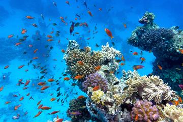 Os recifes de coral são uns dos ecossistemas mais ameaçados do planeta