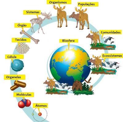 Os seres vivos são organizados em diferentes níveis