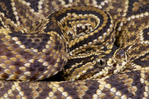 Os soros antiofídicos são usados para evitar consequências graves em acidentes com serpentes