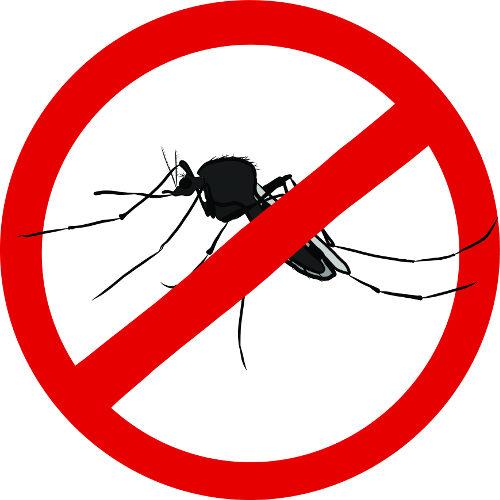 Para acabar com o mosquito, é essencial a destruição dos criadouros