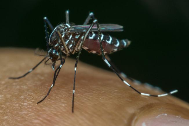 Por meio da picada do mosquito <i>Aedes aegypti</i>, pode ocorrer a transmissão de doenças, como a zika e a dengue