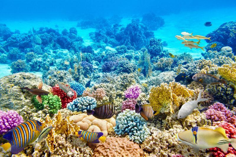 Recifes de corais são ecossistemas marinhos que abrigam uma grande quantidade de espécies.
