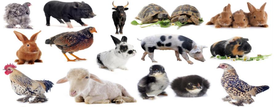 Todos os animais pertencem ao reino Animalia
